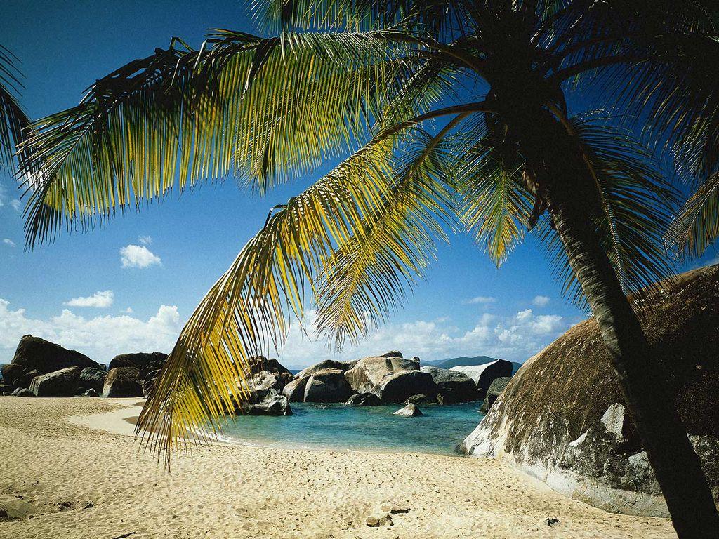 palmiers05