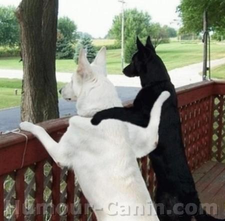 big_1020-chiens-copains